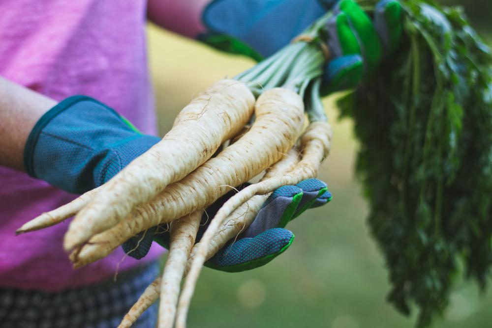 Paštrnák. Foto: Shutterstock