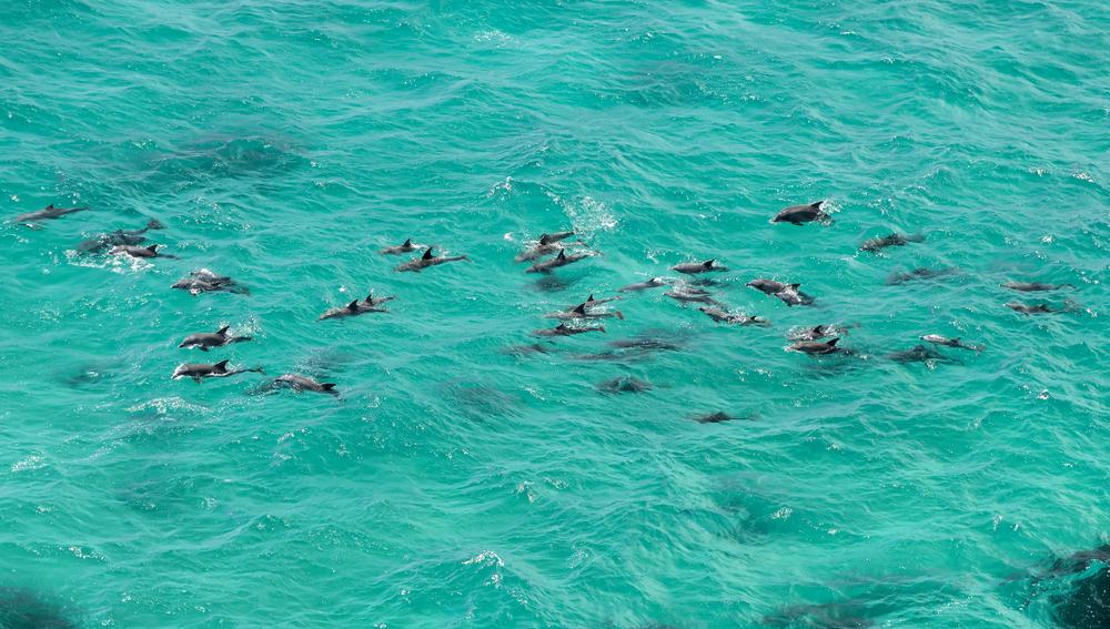 Delfíny. Foto: Shutterstock