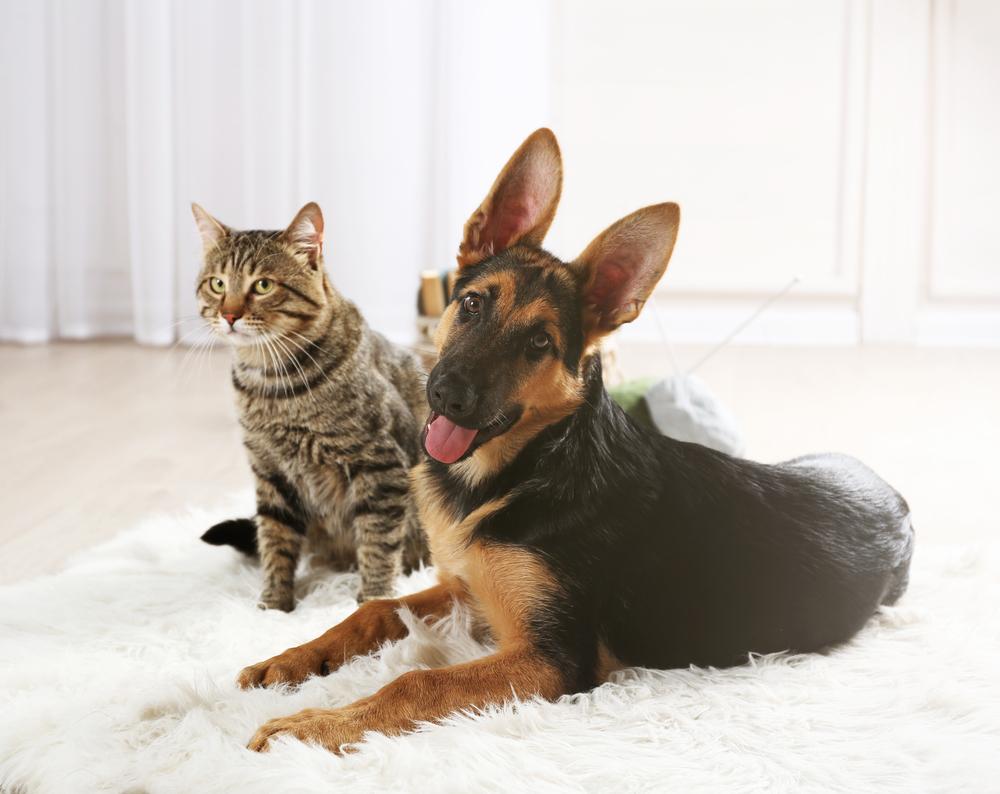 Čistenie od zvieracích chlpov. Foto: Shutterstock