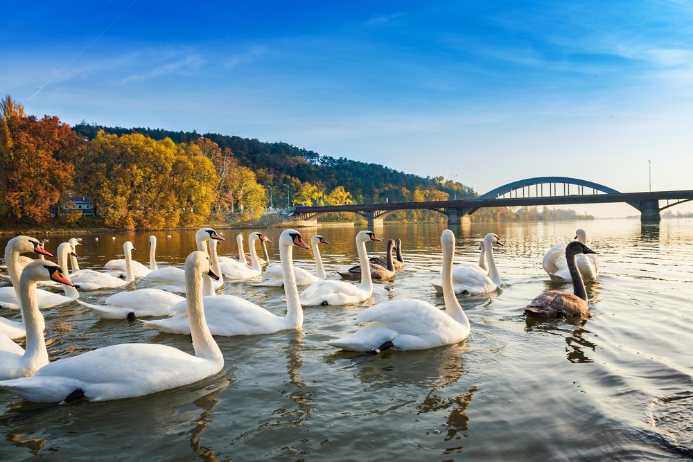 Váh a Sĺňava, Piešťany. Foto: Shutterstock
