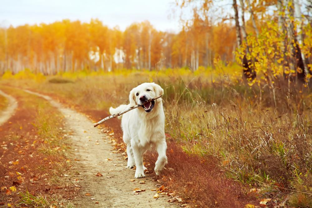 Prechádzky sú vynikajúce proti depresii. Foto: Shutterstock