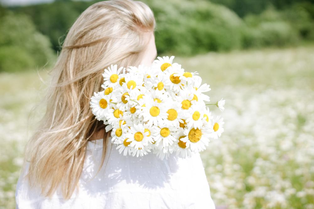 Kamilky na vlasy. Foto: Shutterstock