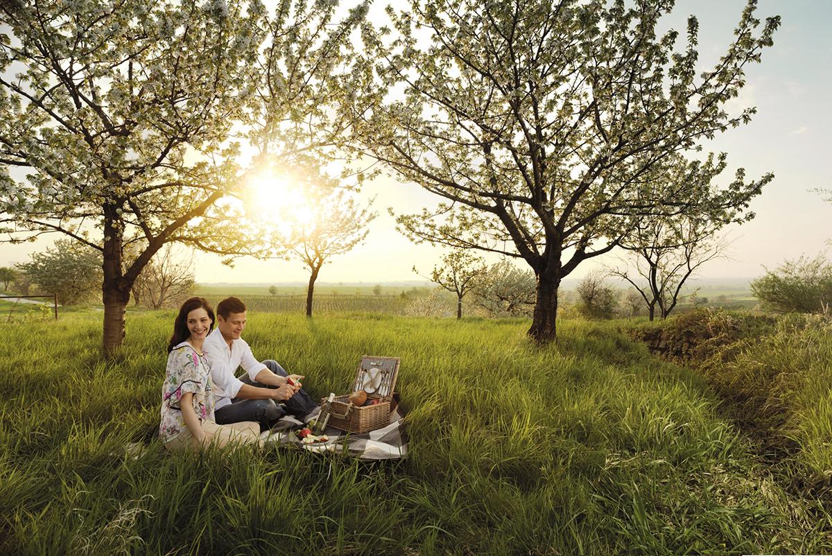 Kvitnúce čerešne v Burgenlande. Foto: ©Burgenland Tourismus/Peter Burgstaller