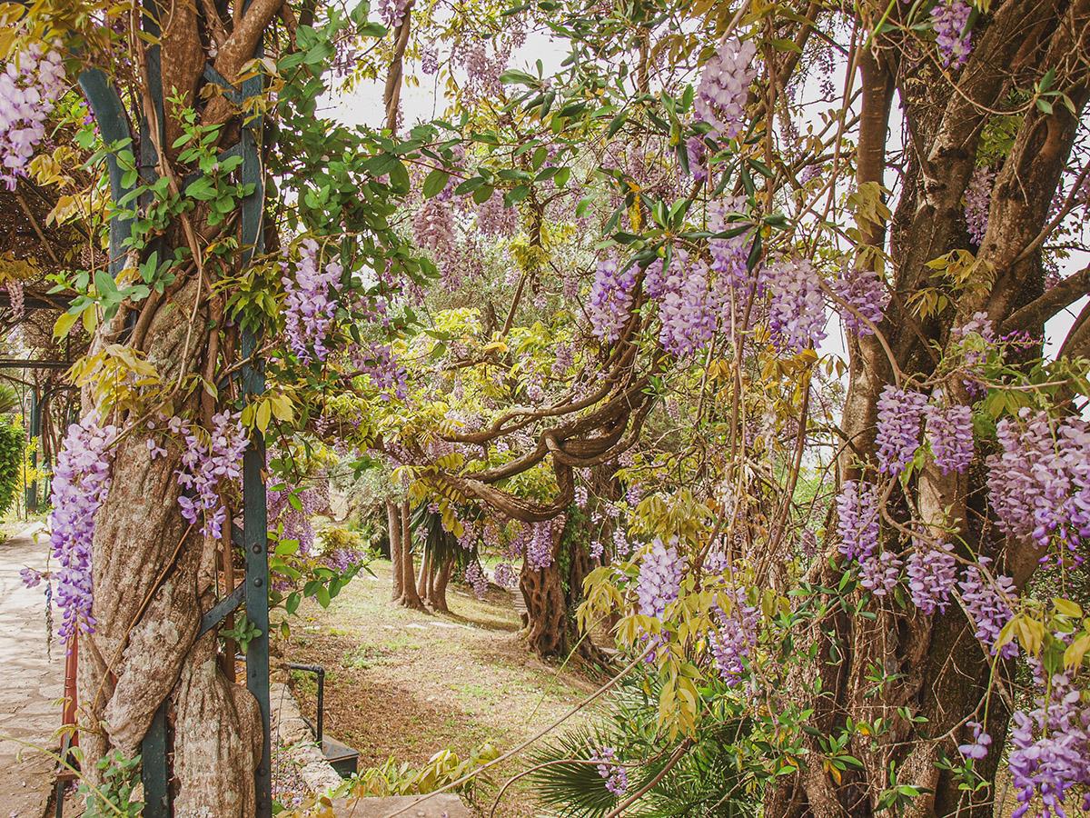 Rozkvitnutá záhrada v Sissinom paláci Achillion.