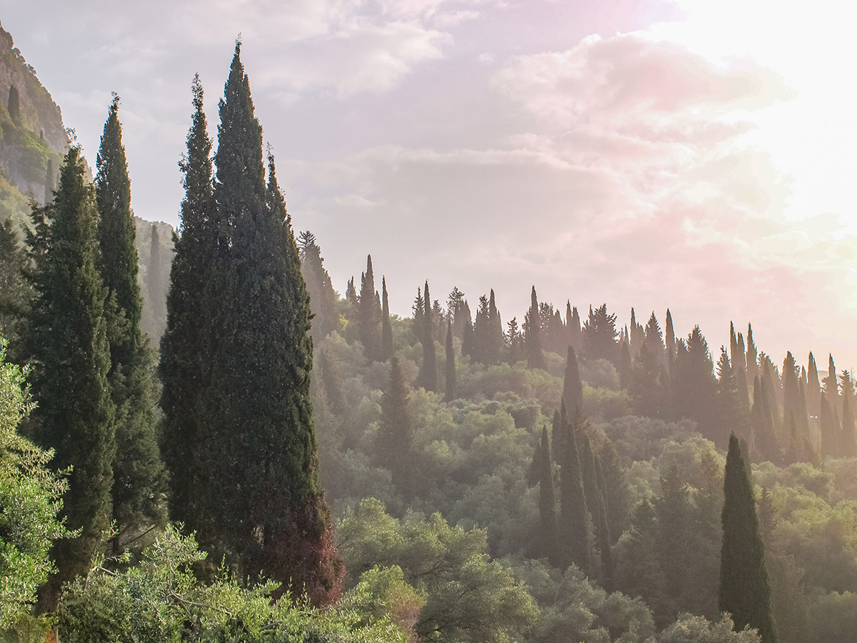 Krásny les v Paleokastritsa, ktorý vás ráno zobutí štebotom vtákov.
