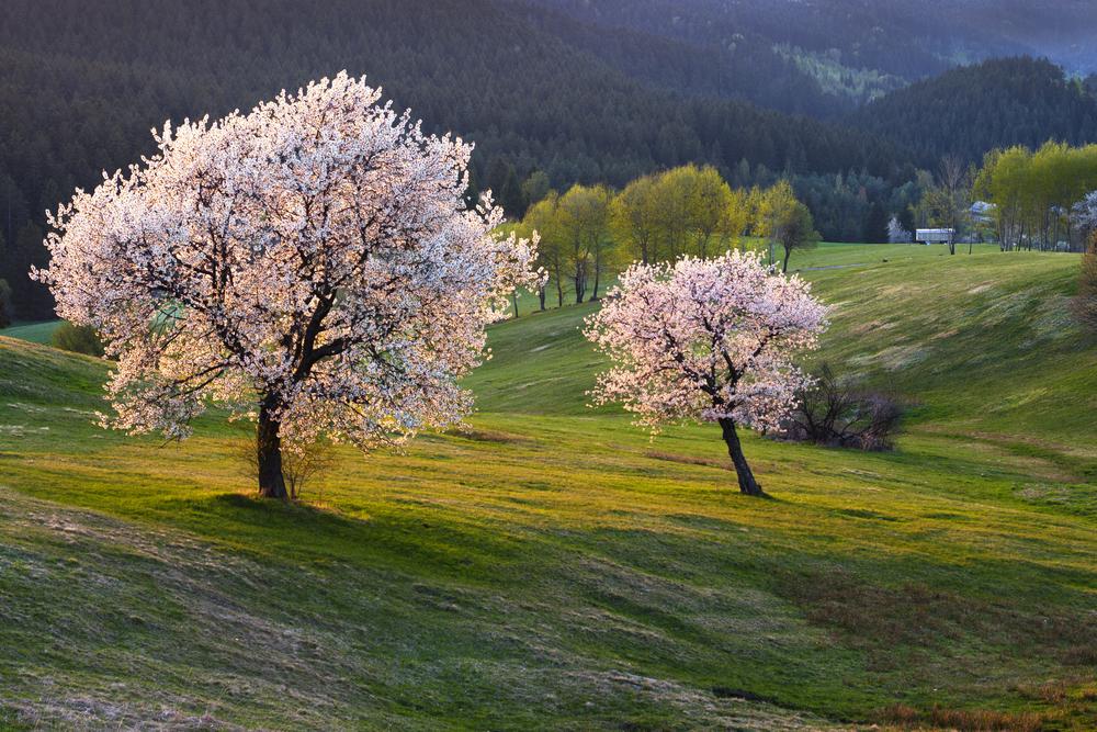 Horehronie. Foto: Shutterstock