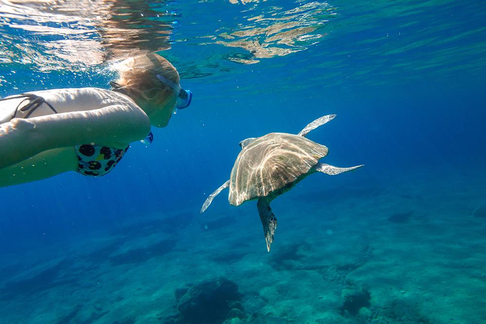 Na Peloponéze určite stretnete aj korytnačky. Foto: Shutterstock