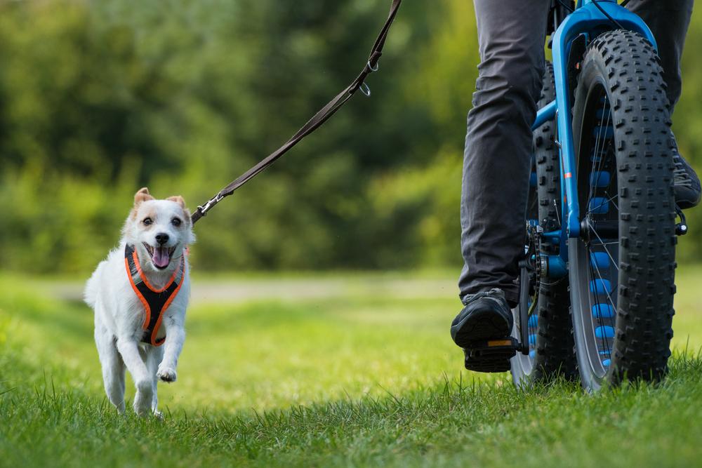 Bicyklovanie so psom. Foto: Shutterstock