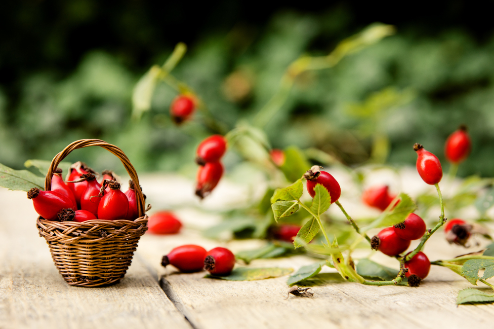 Šípky. Foto: Shutterstock