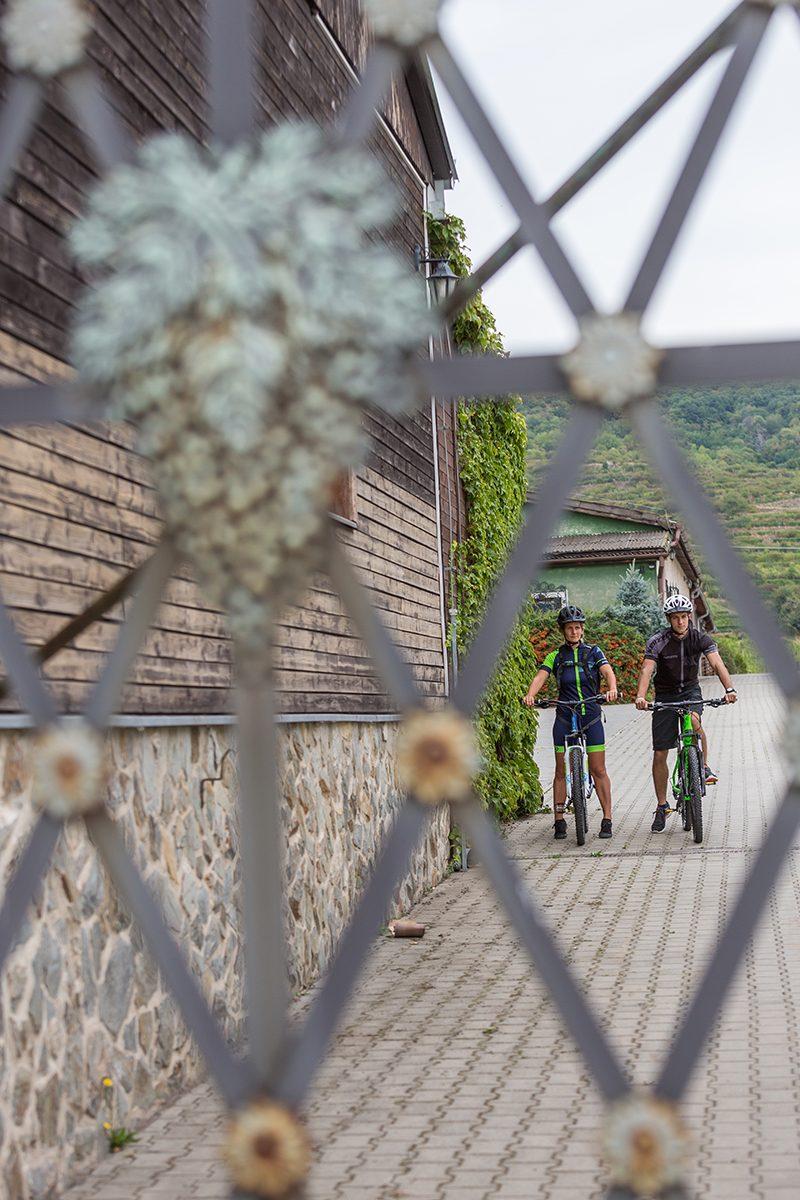 V Malokarpatskej oblasti sú ideálne podmienky na pestovanie viniča. Foto: Miro Pochyba