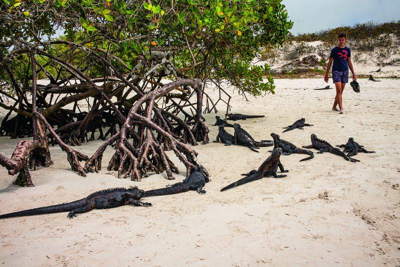 Galapágy - tajomnéostrovy bez luxusných reštauráciia hotelov, kde v mori plávajútulene, tučniaky a veľryby.