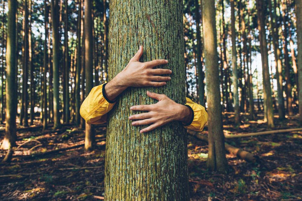 Austrálska vláda plánuje zasadiť bilión nových stromov. Foto: Shutterstock