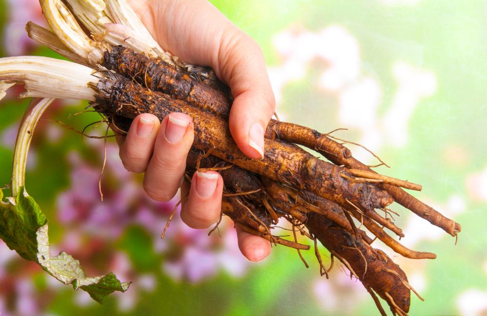 Lopúchový koreň. Foto: Shutterstock