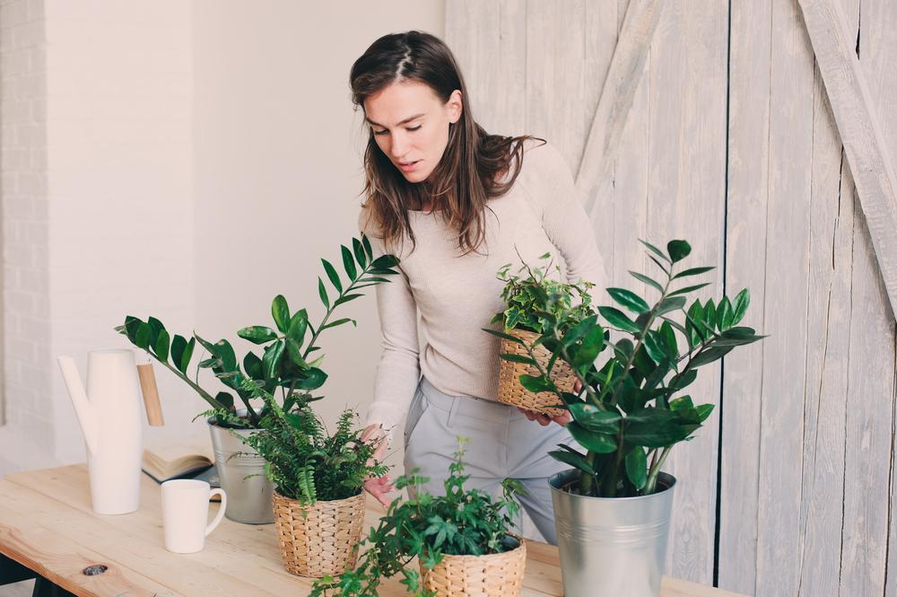 Rastliny. Foto: Shutterstock