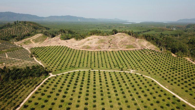 Palmový olej ničí dažďové pralesy. Foto: Shutterstock