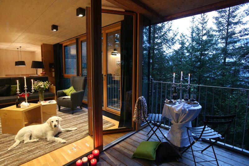 Pes v Gradonna Mountain Resort. Foto: www.schultz-ski.at
