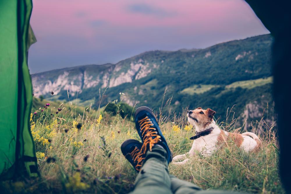 Profesionál. Foto: Shutterstock