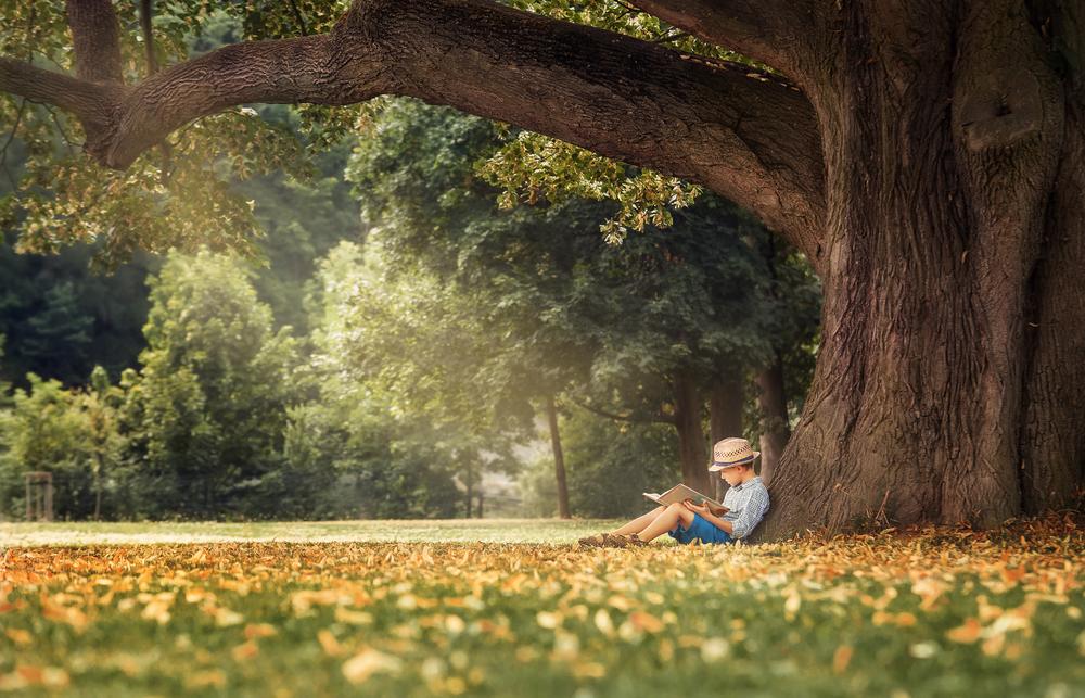 Lipa. Foto: Shutterstock