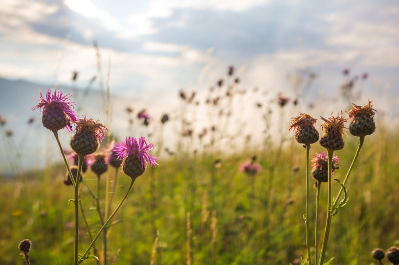Prírodná rezervácia pri obci Obyce. Foto: Shutterstock