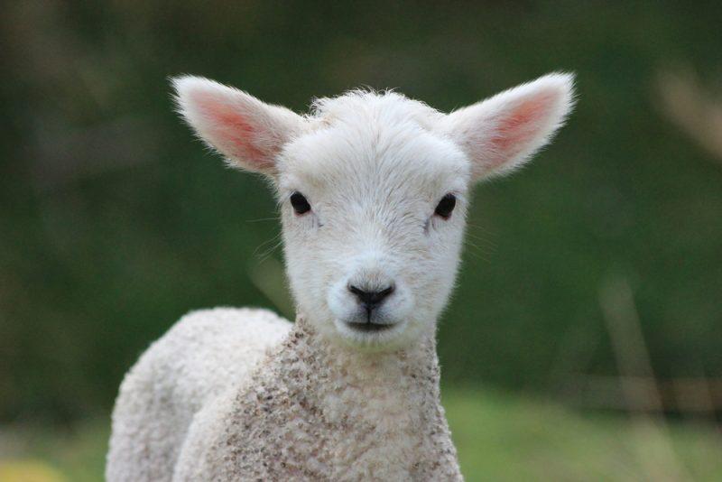 Ak máte radi zvieratká, vyberte sa na biofarmu Východná. Foto: Shutterstock
