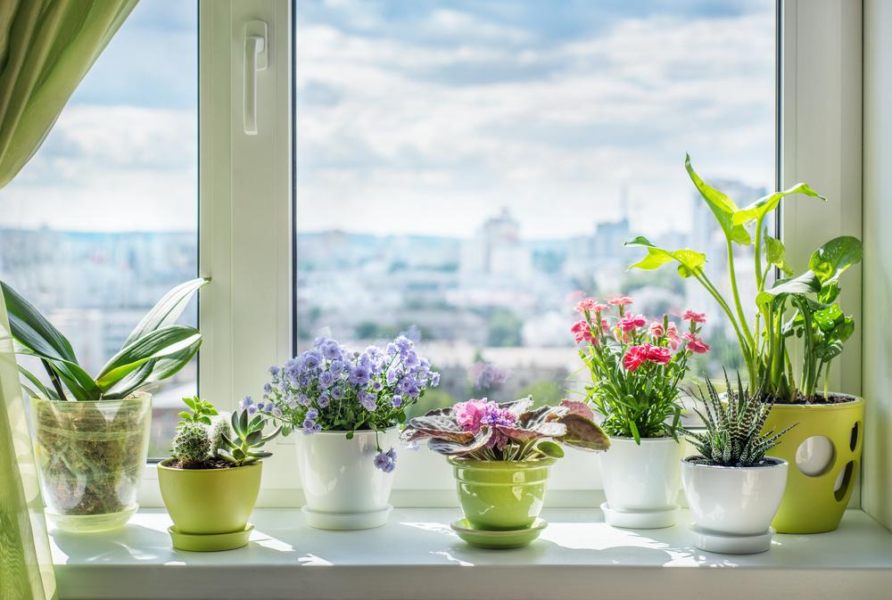 Kvetináče. Foto: Shutterstock