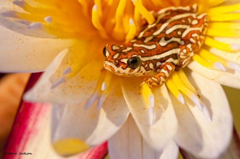 Pesticídy nazývané atrazín podporujú také zvýšenie produkcie estrogénu, že sa samce premenia na plodné samice. Foto: Shutterstock