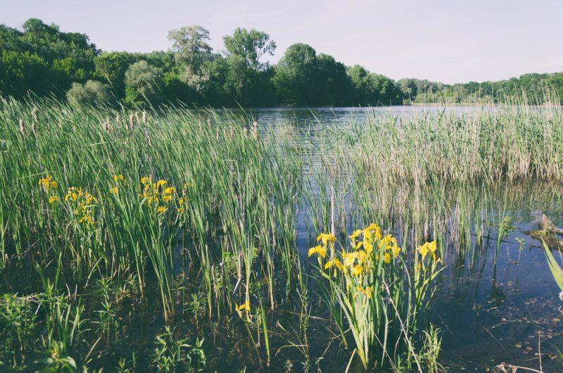 Maďarské jazero Tisa. Foto: Shutterstock