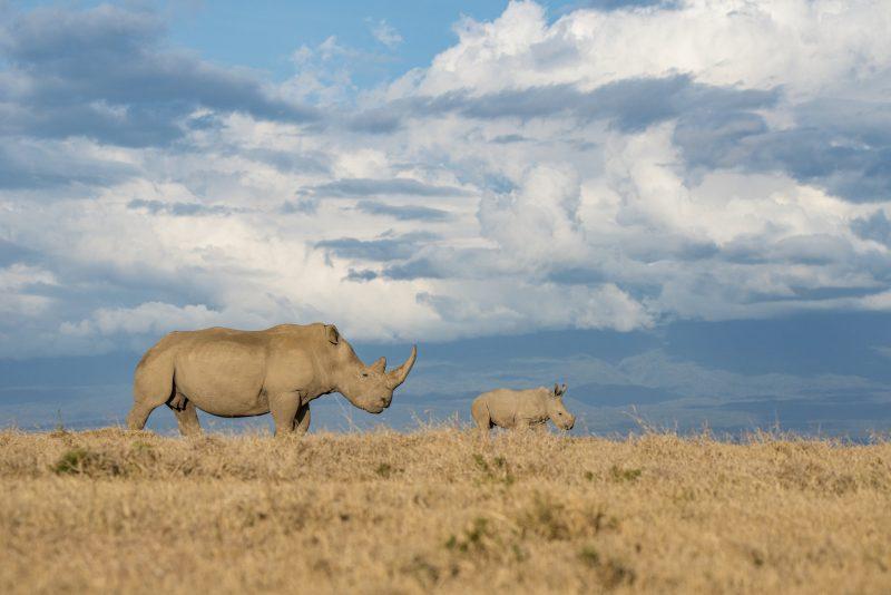 Nosorožec dvojrohý. Foto: Stanislav Cigánek, Tomáš Hulík, Martin Šimko