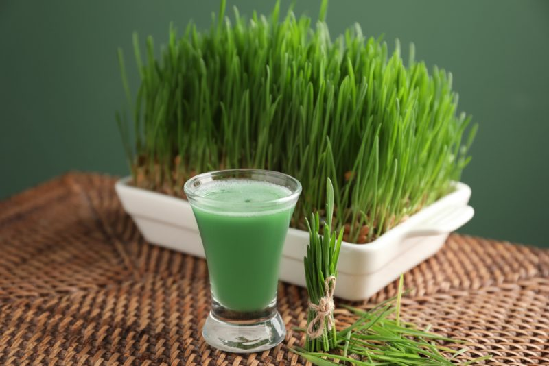 Mladá pšenica. Foto: Shutterstock