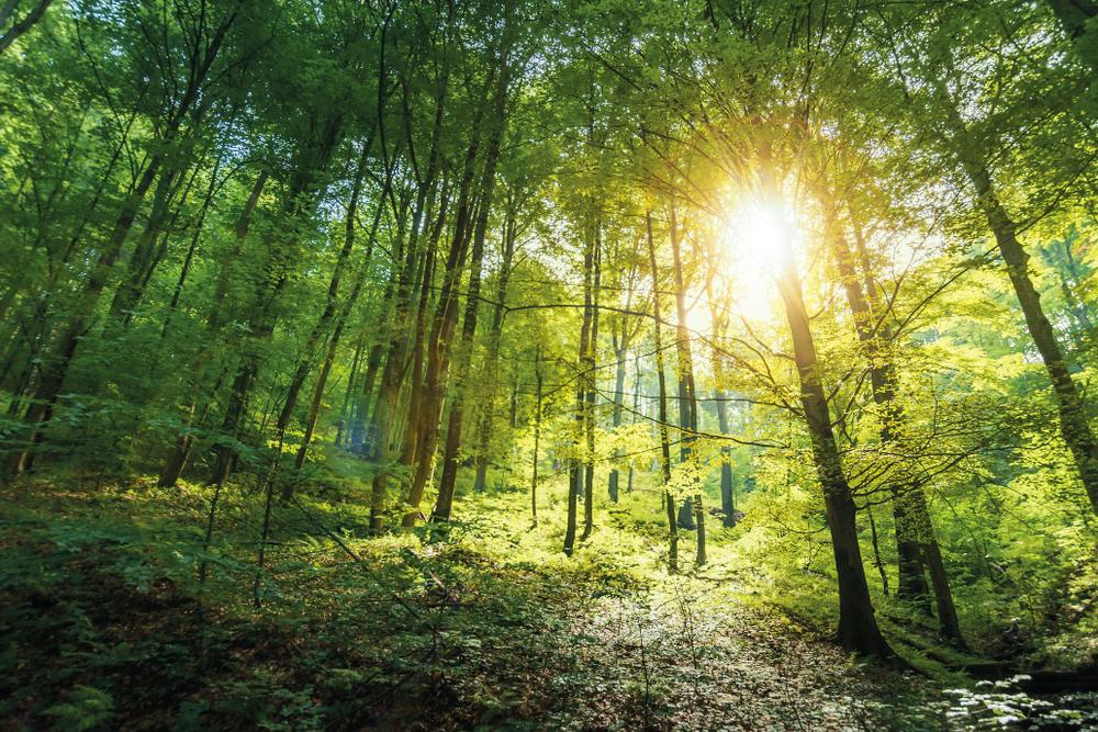 Bukové pralesy. Foto: Shutterstock