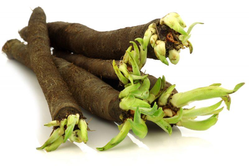 Čierny koreň. Foto: Shutterstock