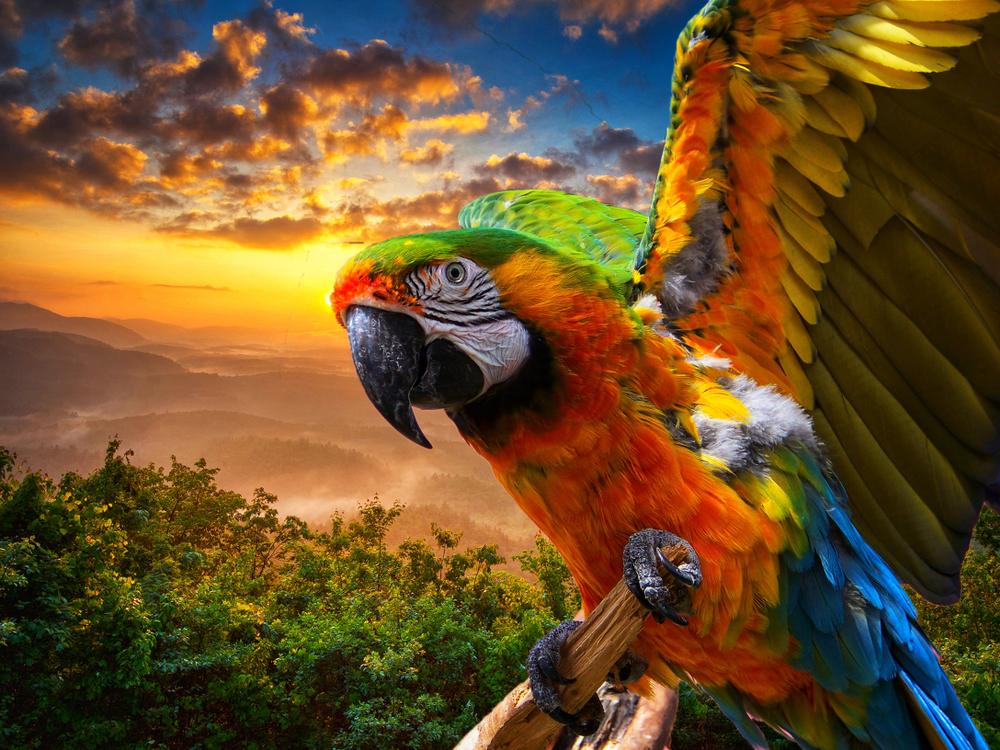 Papagáj. Foto: Shutterstock
