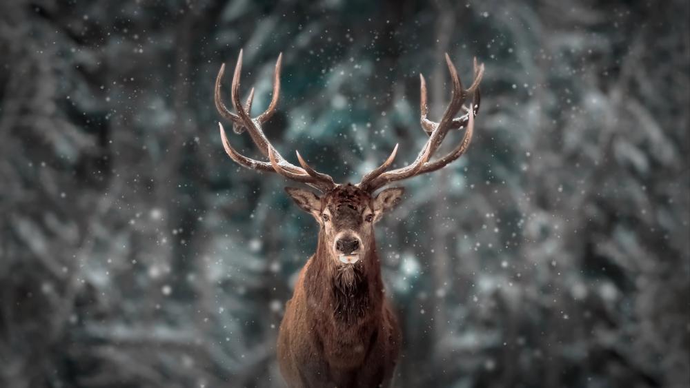 Jeleň. Foto: Shutterstock
