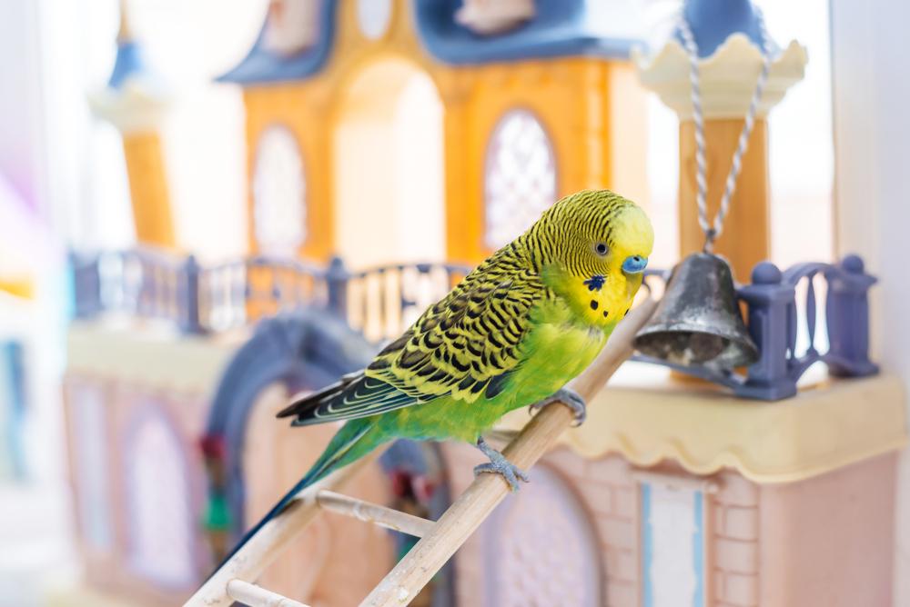 Andulka. Foto: Shutterstock