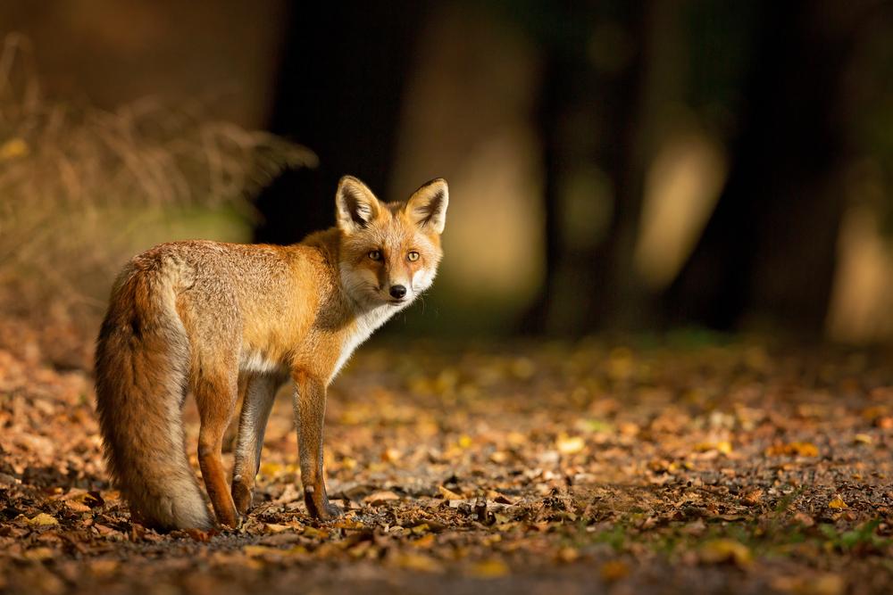Fauna. Foto: Shutterstock