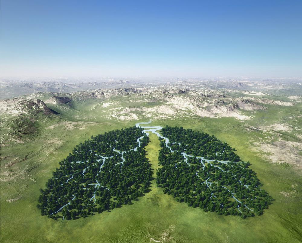 Pľúca Zeme. Foto: Shutterstock