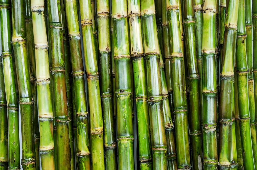 Svetová produkcia cukru presahuje 100 miliónov ton ročne. Foto: Shutterstock