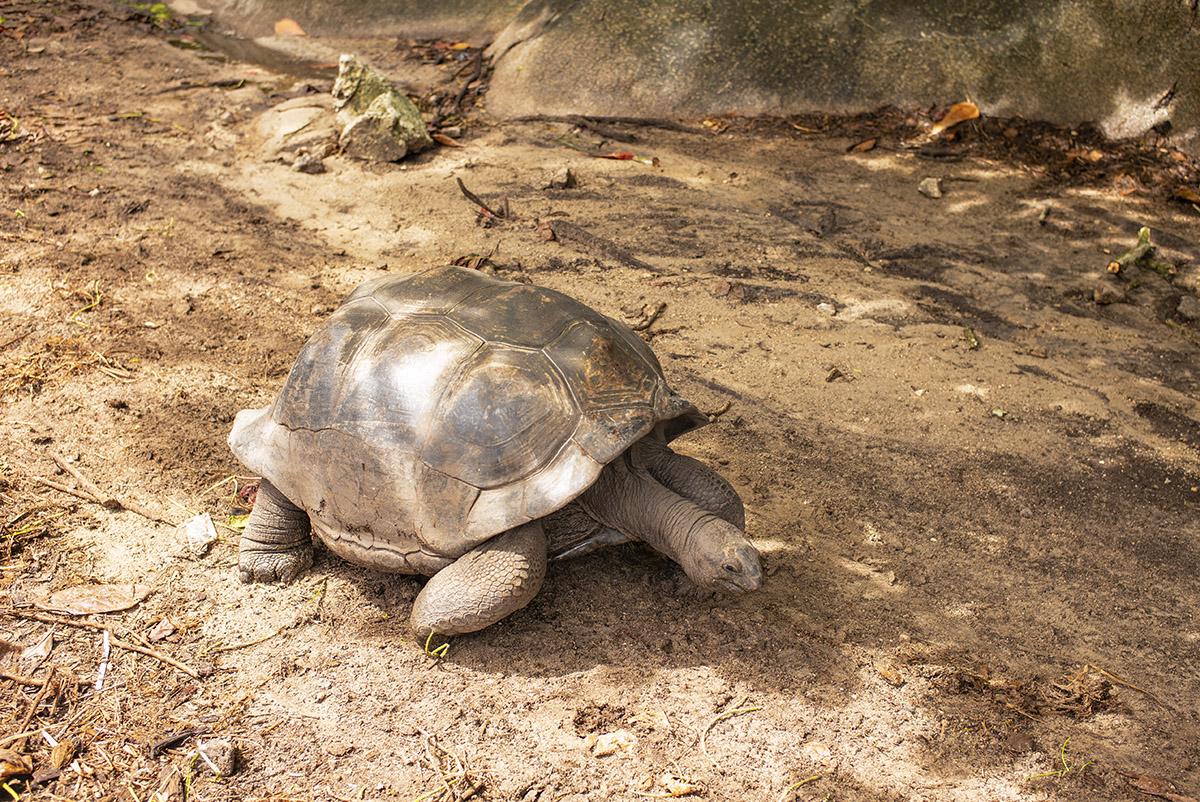 Seychely, ostrovy s obrovskými korytnačkami, ktoré žijú najdlhšie spomedzi všetkých suchozemských živočíchov. Foto: Bubo