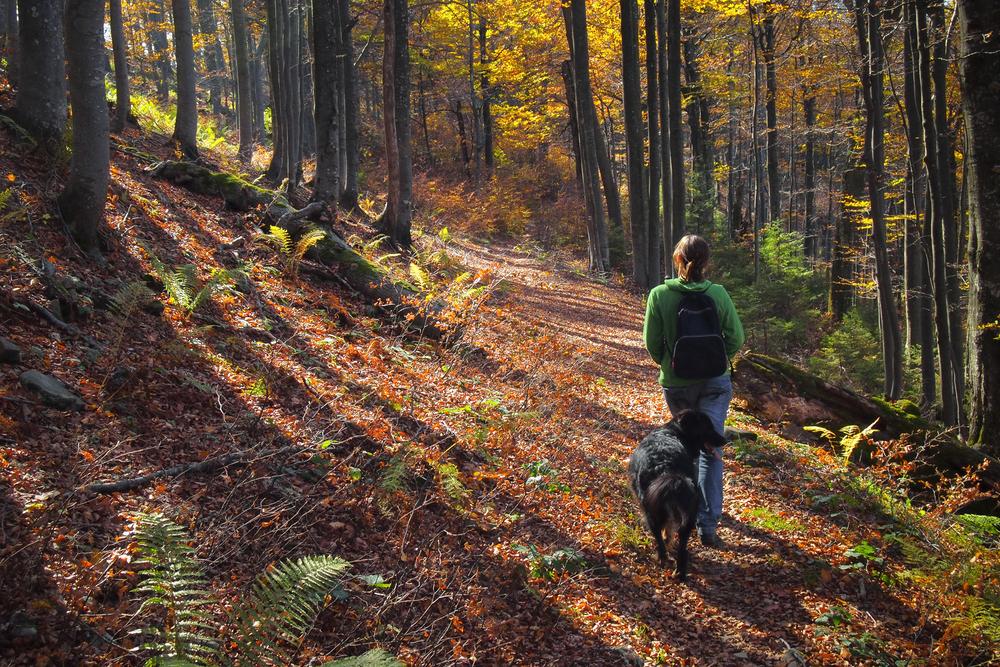 Prechádzky so psom. Foto: Shutterstock