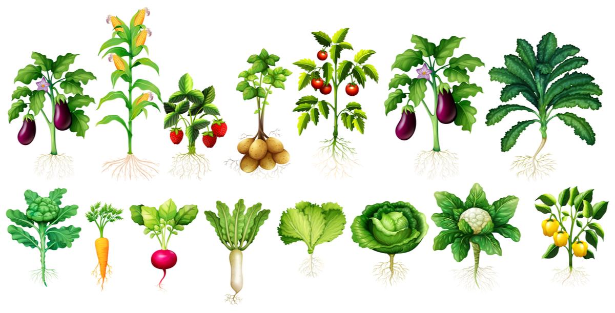 Zasaď si zeleninu na baklón alebo do záhrady. Foto: Shutterstock