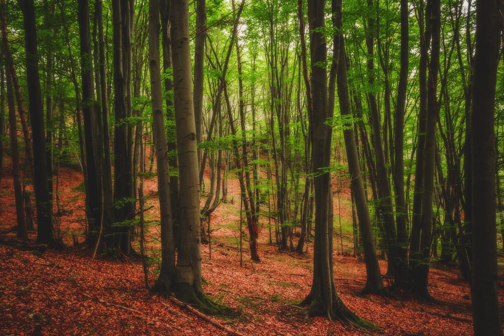 Les Slovensko. Foto: Shutterstock