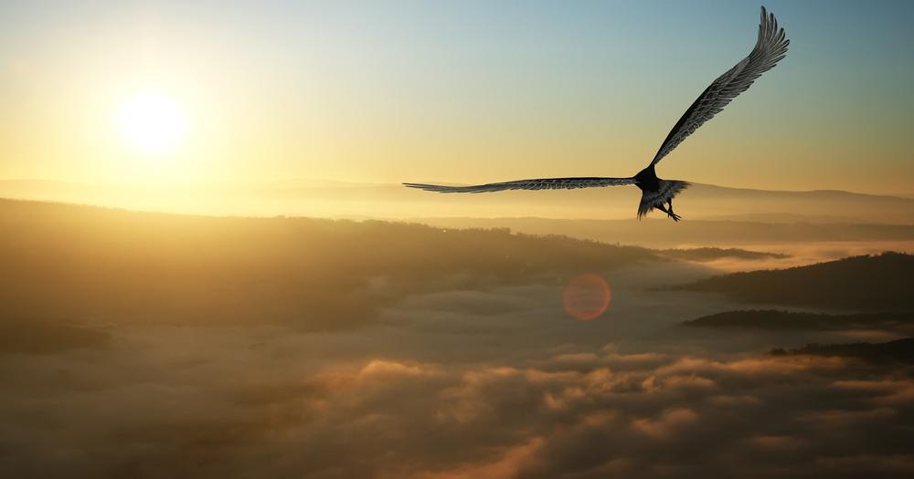 Orol. Foto: Shutterstock