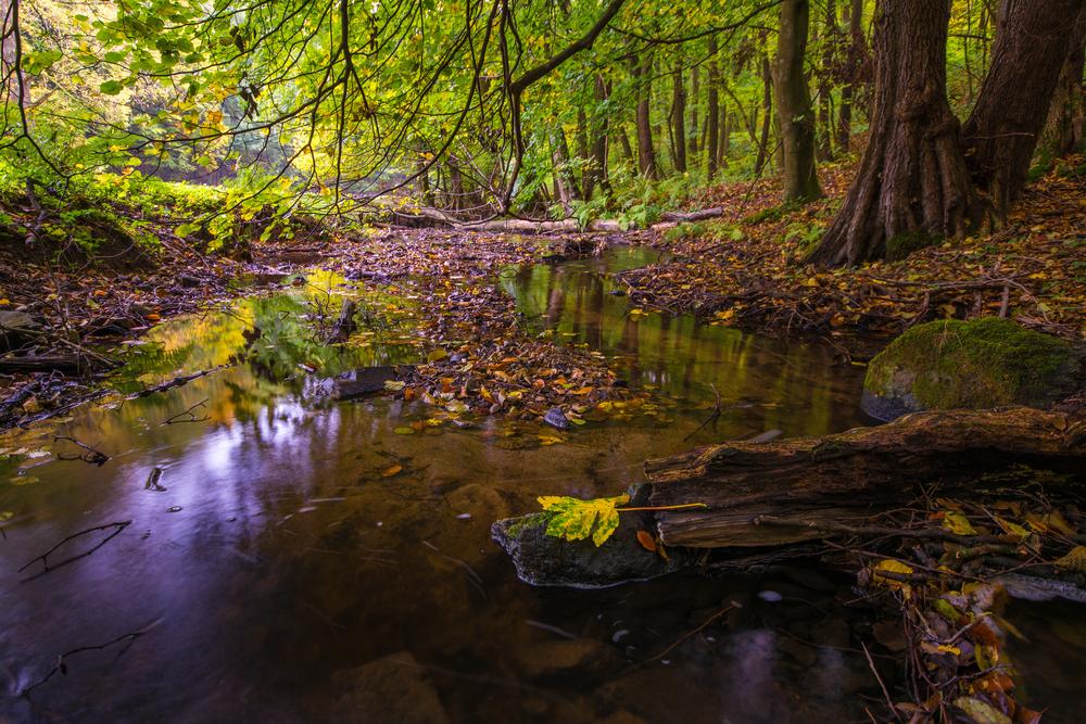 Potok, Malé Karpaty. Foto: Shutterstock