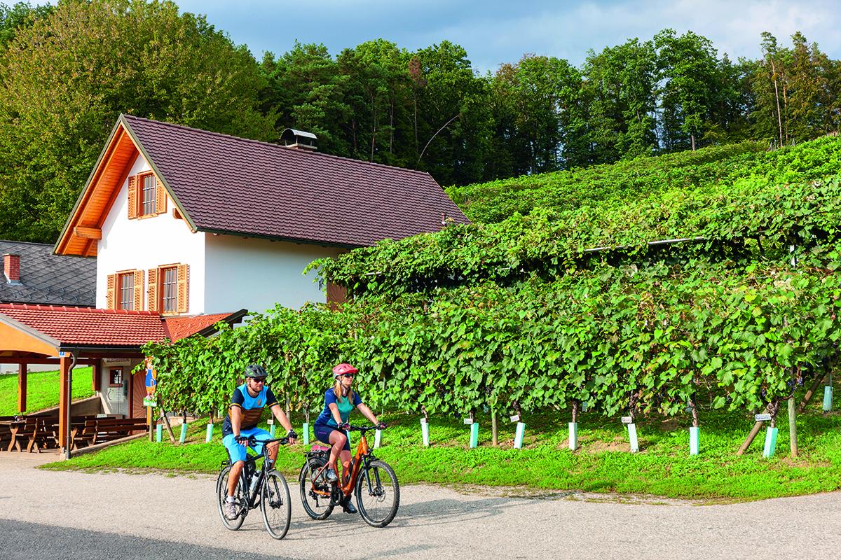 Cyklotrasa Uhudler. Foto: (c)Burgenland Tourismus, Daniel Simon