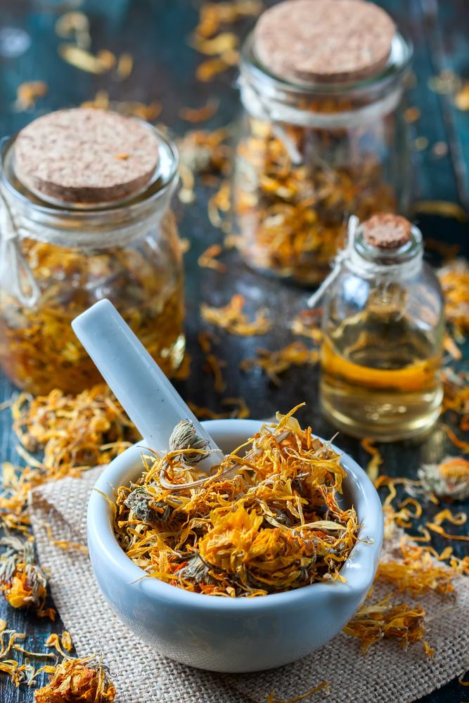 Sušený nechtík lekársky. Foto: Shutterstock