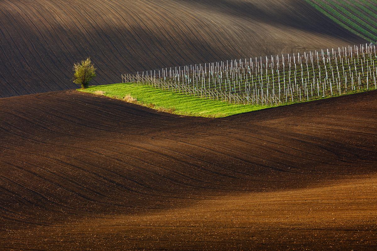 Vinice v Čejkoviciach. Foto: Martin Rak