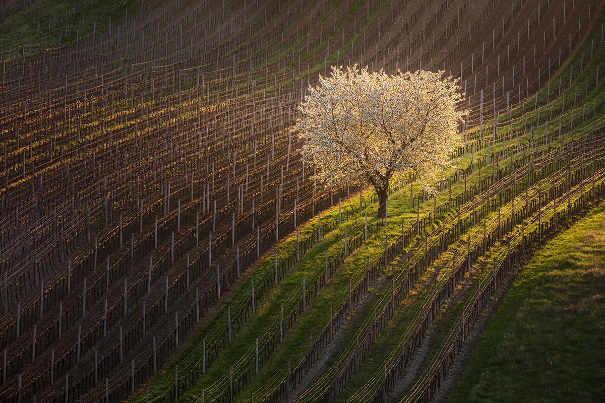Najradšej fotím na jar a na jeseň. Foto: Martin Rak