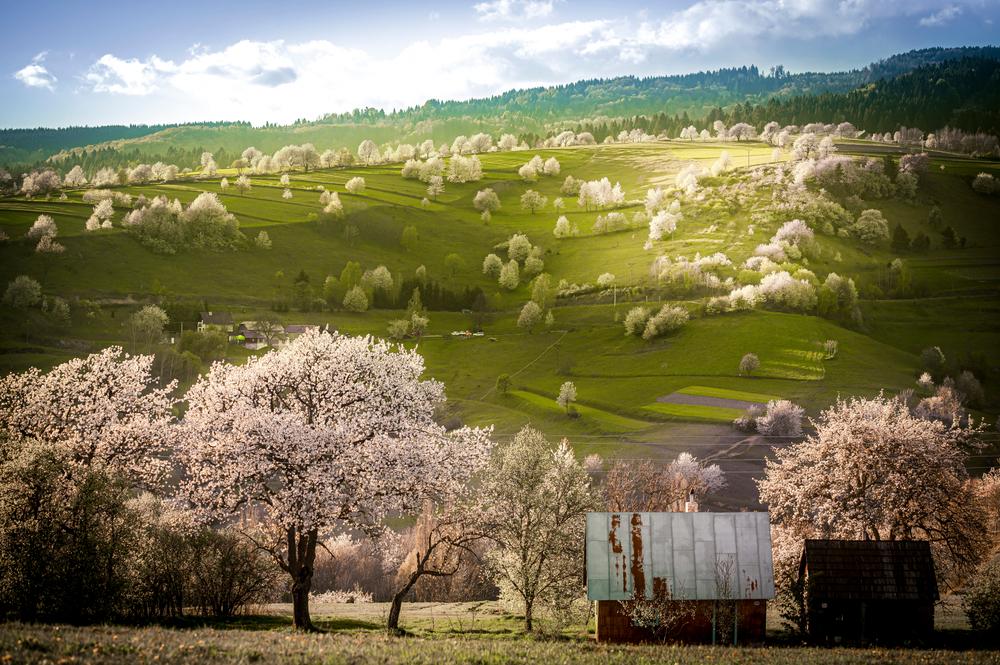 Poľana, Hriňová. Foto: Shutterstock