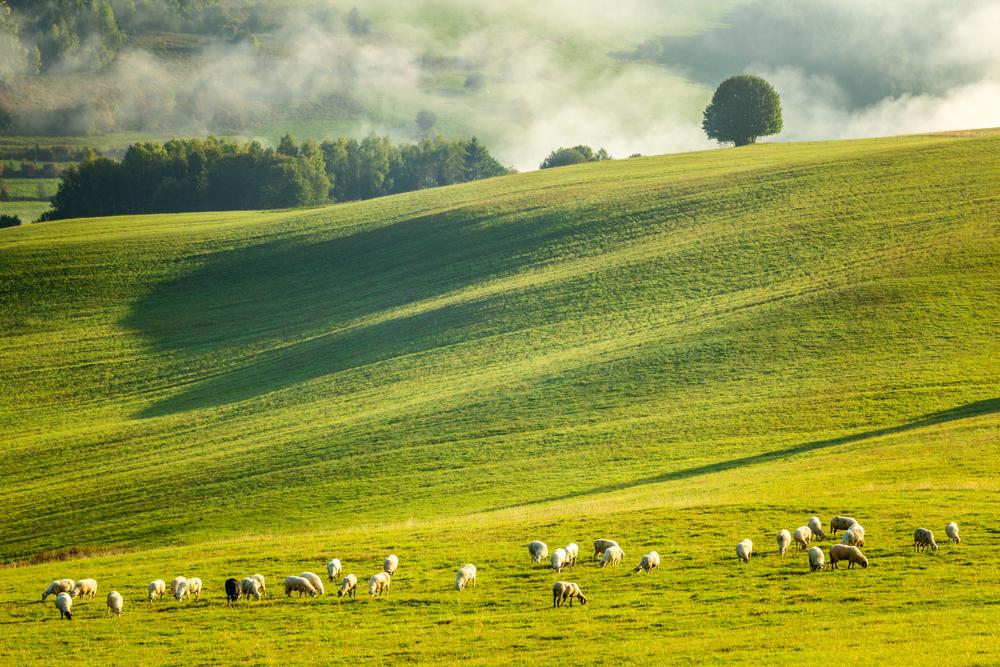 Oravska Lesná. Foto: Shutterstock