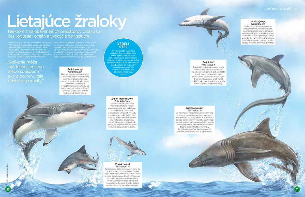 Žraloky 40-41